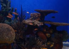 Underwater Paradise. An aquarium at a zoo with lots of tiny fish and pretty coral with beautiful blue water stock photos