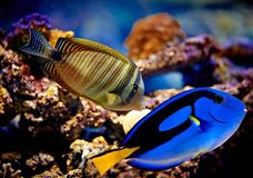 Underwater paradise Royalty Free Stock Photography