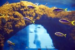 Underwater paradise Stock Photos