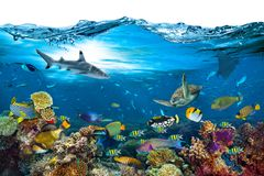 Underwater paradise coral reef wave isolated background royalty free stock photos