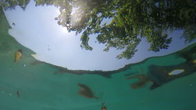 Underwater peeking sun. Handheld slow motion underwater shot of looking at sky, sun and tree stock video footage