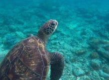 Underwater photo of big sea turtle. Lovely marine animal close-up. Stock Photography