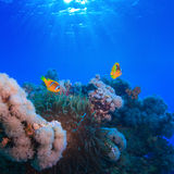 Underwater photo coral garden with anemone of yellow clownfish. Water surface with sunrays underwater coral garden with anemone and a pair of yellow clownfish royalty free stock photos