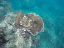 Underwater photo of coral reef and clear blue water Royalty Free Stock Photography