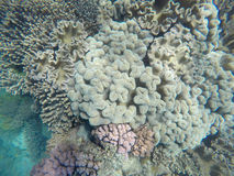 Underwater photo of coral reef and clear blue water Royalty Free Stock Image