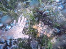 Underwater photo of woman hand trying to take an orange starfish. Photo made on action camera. Royalty Free Stock Photos
