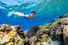 Woman snorkeling. Underwater photo of woman snorkeling in a clear tropical water at coral reef observing moray eel stock photos