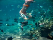 The underwater photo of a young woman royalty free stock image