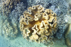 Underwater photograph of living coral Stock Images