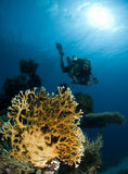 Underwater photographer Royalty Free Stock Image