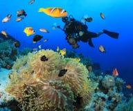 Underwater Photographer and Clownfish Stock Image
