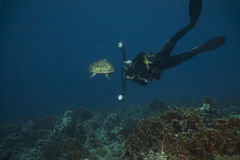 Underwater photographer and hawksbill turtle Royalty Free Stock Image
