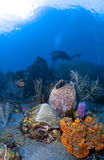 Underwater Photographer in St Lucia Royalty Free Stock Photography