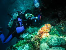 Underwater photographer is taking picture of a scorpion fish Stock Images