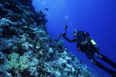 Underwater Photographer with a Turtle. A underwater photographer shot a turtle at a beautiful reef in the red sea Stock Image