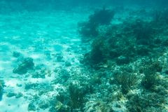Underwater photography of the Caribbean Sea. Corals and fish Stock Images