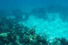 Underwater photography of the Caribbean Sea. Corals and fish Stock Photo