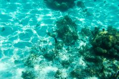 Underwater photography of the Caribbean Sea. Corals and fish Royalty Free Stock Photo