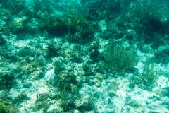 Underwater photography of the Caribbean Sea. Corals and fish Stock Photos