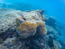 Maldivian reef fishes stock image