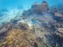 Maldivian reef fishes stock photo