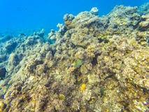 Maldivian reef fishes. Underwater photography of Maldivian fishes near Olhuveli island, Maldives Stock Photos