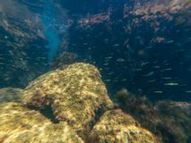 Underwater photography in sea at bottom with stones and fish and jellyfish Stock Images