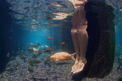 Underwater picture of female legs and koi fishes in pond Stock Image