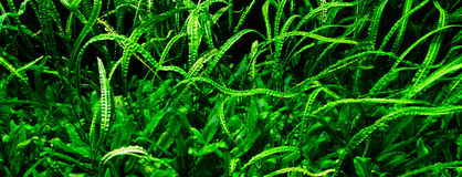 Underwater plants Royalty Free Stock Images