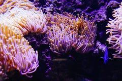 Underwater plants in the aquarium Royalty Free Stock Images