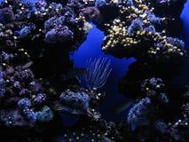 Underwater plants Royalty Free Stock Photo