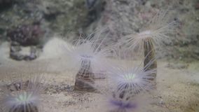 Underwater plants on the bottom look like palm trees. Underwater plants swaying under water stock footage