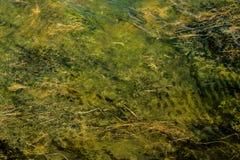 Underwater plants Stock Images