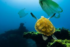Underwater pollution. Underwater turtle floating among plastic bags. Underwater turtle floating among plastic bags. Concept of pollution of water environment stock photography