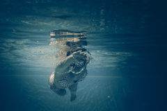Underwater portrait of young woman Royalty Free Stock Photos