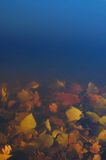Underwater profondo Immagine Stock Libera da Diritti