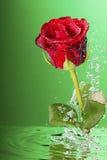 Underwater red rose, Stock Photos