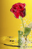 Underwater red rose. Underwater red rose surrounded by bubbles on the yellow background Royalty Free Stock Images