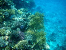 Underwater in the Red Sea, corals. The underwater scenery with coral reefs and fish in the Red Sea. Sharm el Sheikh, Egypt Stock Image