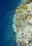 Underwater reef Royalty Free Stock Image