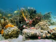 Underwater reef with beautiful colors Stock Image