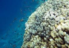 Underwater reef Royalty Free Stock Photo