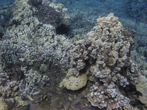 Underwater reef Stock Photography
