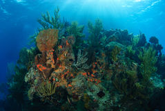 Underwater reef. Rocky coral reef with sunlight shining down underwater stock images