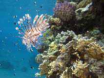 Underwater reef scene Stock Photo