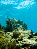 Underwater reef and sea life. Underwater reef, seaweed and fish royalty free stock image