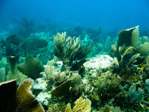 Underwater reef and sea life. Underwater reef, seaweed and fish stock photo