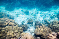 Underwater reef stone and sea life Stock Images