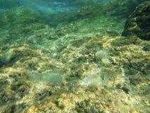 Underwater reef Royalty Free Stock Photos