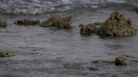 Underwater reefs. Indian Ocean video. Low contrast, desaturate. Underwater reefs. Indian Ocean video horizontal. Low contrast, desaturate stock video